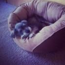 Ollie - My new puppy
